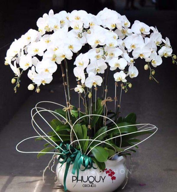 Hoa lan trang